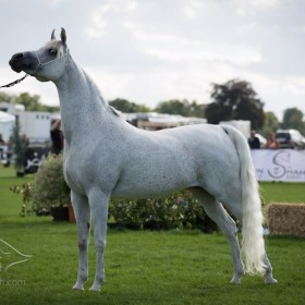 AHO Breeders' European Championship 2013 - Chantilly