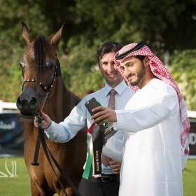 Abu Dhabi 2015 Arabian Horses Championship