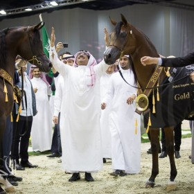 Dubai 2015 Arabian Horses Championship