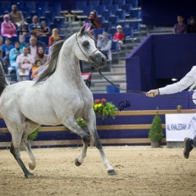 El Jadidah International Arabian Horses Championship 2015