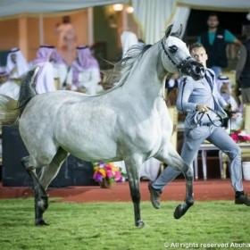 Makkah 6th Arabian horses Championship