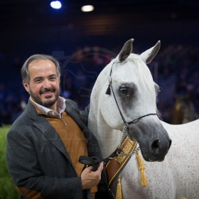 WORLD Arabian Horses Championships PARIS 2015