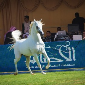 King Abdulaziz Center 2nd Arabian Horses Show