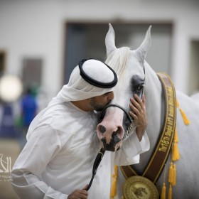 Sharjah 2017 International Arabian Horses Championship
