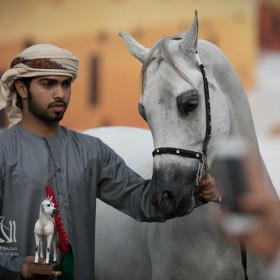 UAE National Arabian Horses Championship 2017